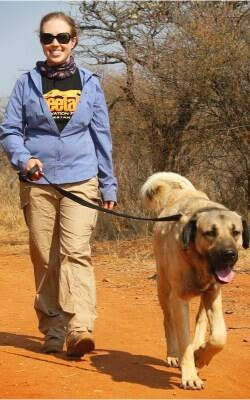 Anatolian shepherd dog at Cheetah Conservation Fund