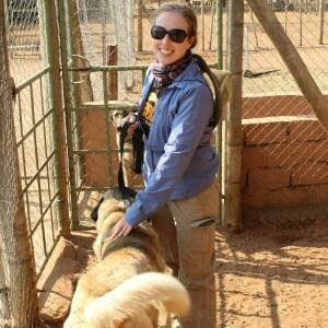 anatolian shepherd at CCF Namibia